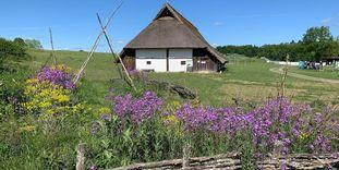 Heuneburg – Stadt Pyrene, naturbelassene Wiese mit rekonstruiertem Keltenhaus