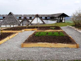 Heuneburg - Stadt Pyrene, Keltische Pflanzenwelt